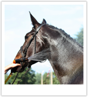natural grooming for horses